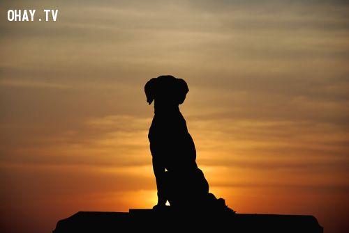 Câu chuyện về những chú chó trung thành tới chết