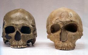 Hộp sọ người hiện đại (trái) và người Neanderthal (phải)