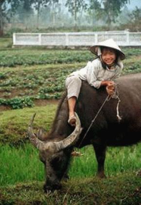 Quy mô gia đình ở Việt Nam đang thu nhỏ