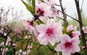 Mùa xuân phía trước