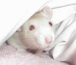 Con chuột nhắt và tờ giấy bạc
