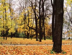 Vương miện mùa thu