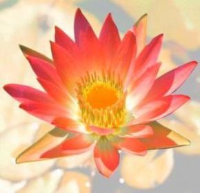 Văn hoá giáo dục Phật Giáo
