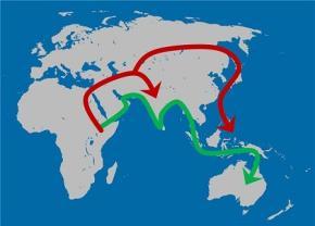 Các cuộc di dân sang lục địa khác cách đây 130.000 năm: đầu tiên dọc theo vành đai Ấn Độ Dương (mũi tên màu xanh lá cây), tiếp theo là làn sóng di cư thứ hai vào lục địa Á-Âu (mũi tên màu đỏ)