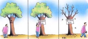 Nhà thông thái & hoa