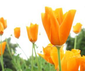 Một đóa hoa tặng doanh nhân