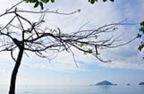 Có rất nhiều cây bàng cổ thụ và phượng đỏ ở Côn Đảo - nơi rất nhiều vị tiền bối với lý tưởng, tư tưởng, niềm tin và khí tiết yêu nước đã bị giam cầm (ảnh: Dr. Nikonian)