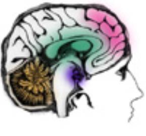 Sự phát triển của nhân loại trong quan hệ với tri thức
