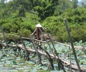 Người kiếm củi ở Huế (trước lăng Gia Long)