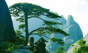 Mong ước tái sinh làm cây thông của Nguyễn Công Trứ