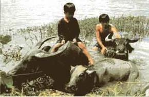 Giá trị đạo đức truyền thống và những yêu cầu đạo đức đối với nhân cách con người Việt Nam hiện nay