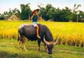 Thói hư tật xấu của người Việt: Dân khí bạc nhược, ra vẻ ái quốc, ...