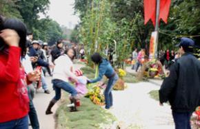 Phố hoa Hà Nội bầm dập vì người dân chen nhau chụp ảnh, bẻ trộm hoa. (Ảnh: Phương Thảo)