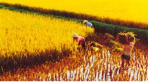 Tác động của toàn cầu hóa đến truyền thống cần cù, tiết kiệm của dân tộc Việt Nam