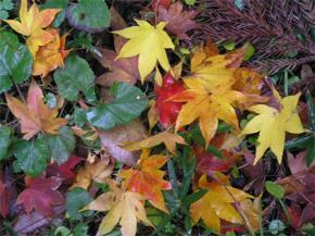 """""""Autumn Leaves"""" - kiếp người như lá thu"""