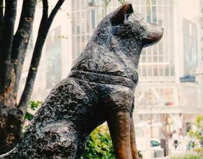 10 câu chuyện về những chú chó trung thành tới chết