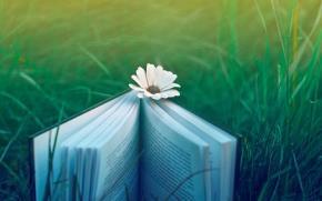 Buôn sách, bán sách và tình yêu văn học