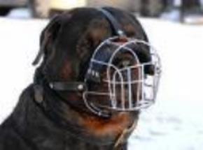 Ngẫm nghĩ về tính cách và số phận của Con Chó