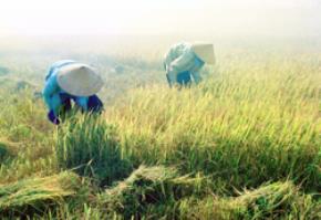 Thói hư tật xấu của người Việt: Tầm thường, Phù phiếm, Hiếu danh