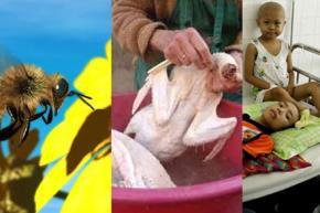 Chuyện con ong ở Mỹ, con gà ở Trung Quốc hóa lại có liên quan đến bệnh K ở Việt Nam.