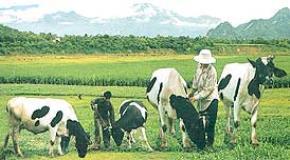 Thói hư tật xấu của người Việt: Thị hiếu tầm thường, Thời gian phí phạm