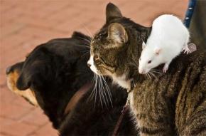Chuyện phiếm của chó, mèo, chuột