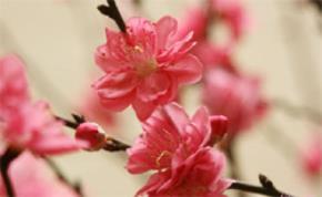 Tin vào mùa xuân