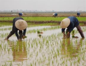 7 nỗi khổ của người nông dân