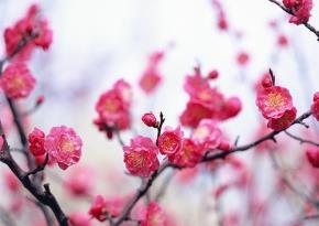"""Yêu thương trong """"Mùa xuân đến rồi đó"""""""