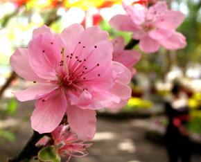 Lời mùa xuân