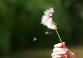 Mùa gió chướng