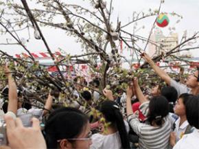 Về việc bẻ hoa lễ hội Tết Dương lịch