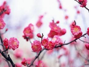Mùa xuân và Vận nước