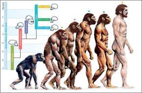 """Tiến hoá của """"Thực thể sống - xã hội"""""""