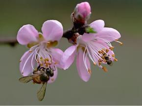 Mùa xuân (Ảnh Nguyễn Sơn)