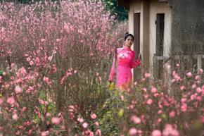 Thiếu nữ rạng ngời bên hoa đào