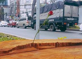 Tin ở hoa hồng*