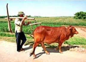 Phỏng vấn một bác nông dân
